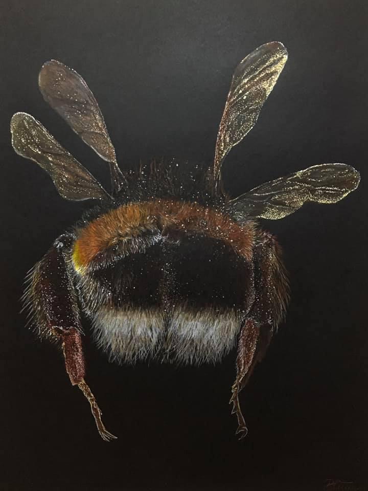 Bumblebee, Buntstiftzeichnung/Papier, 65cm x 50cm