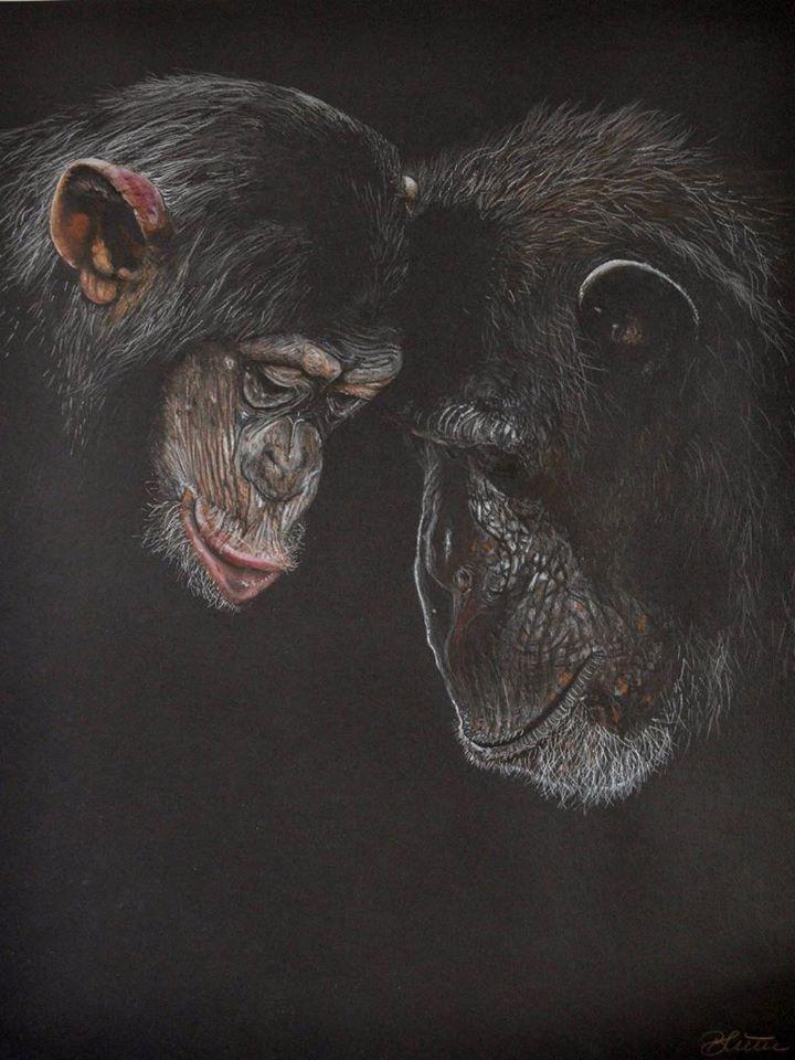 AnimalLove, Buntstiftzeichnung/Papier, 65cm x 50cm