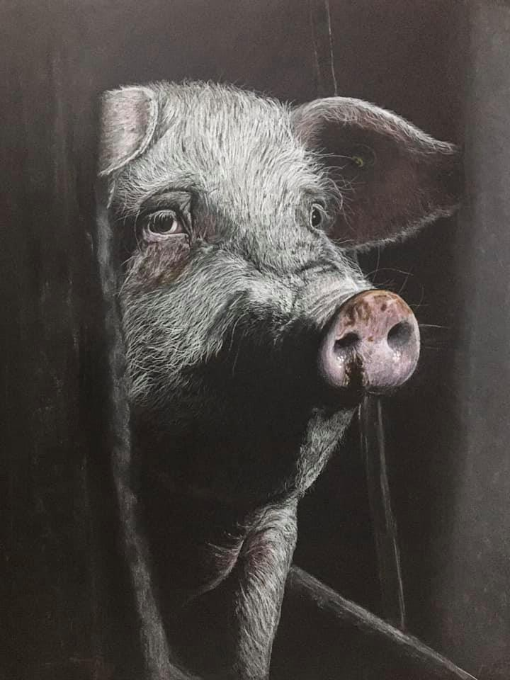 Pig drawing, Buntstifte/Papier, 65cm x 50cm